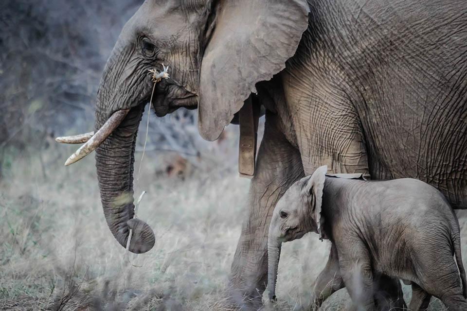 Elefante adulto y bebé