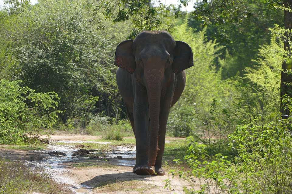 Elefante en camino