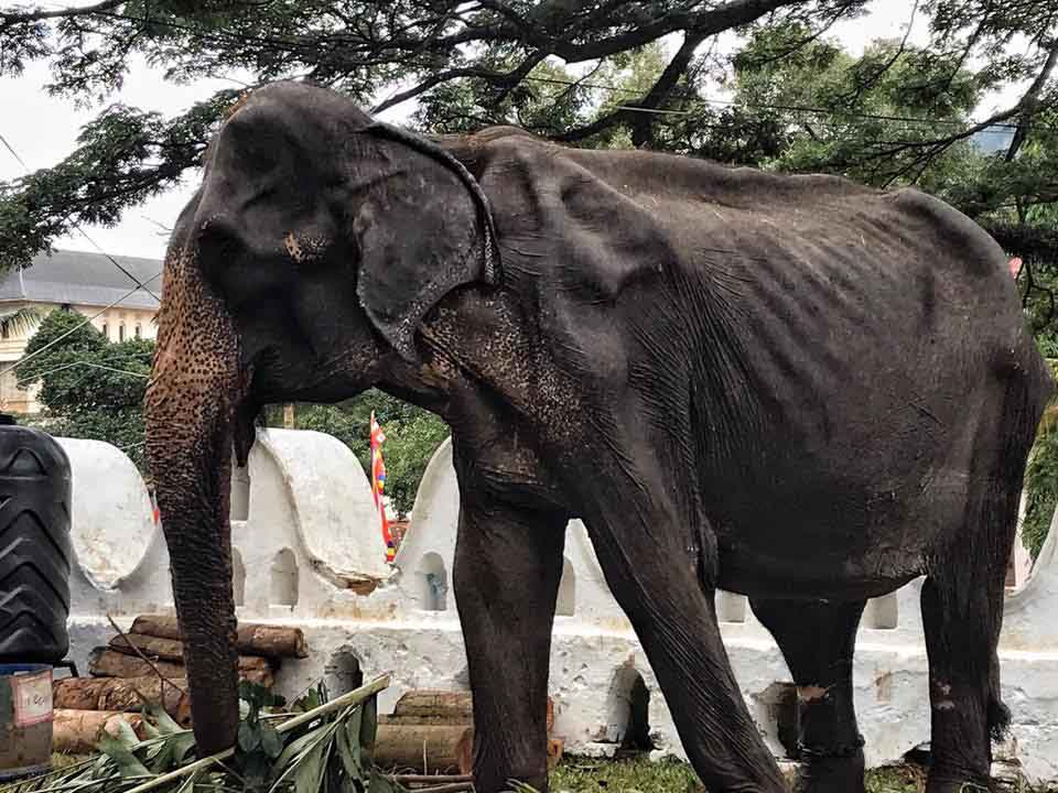 Elefante en mal estado
