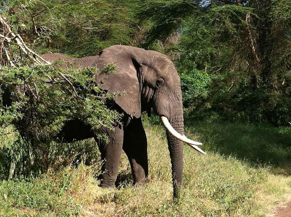 Elefante en selva
