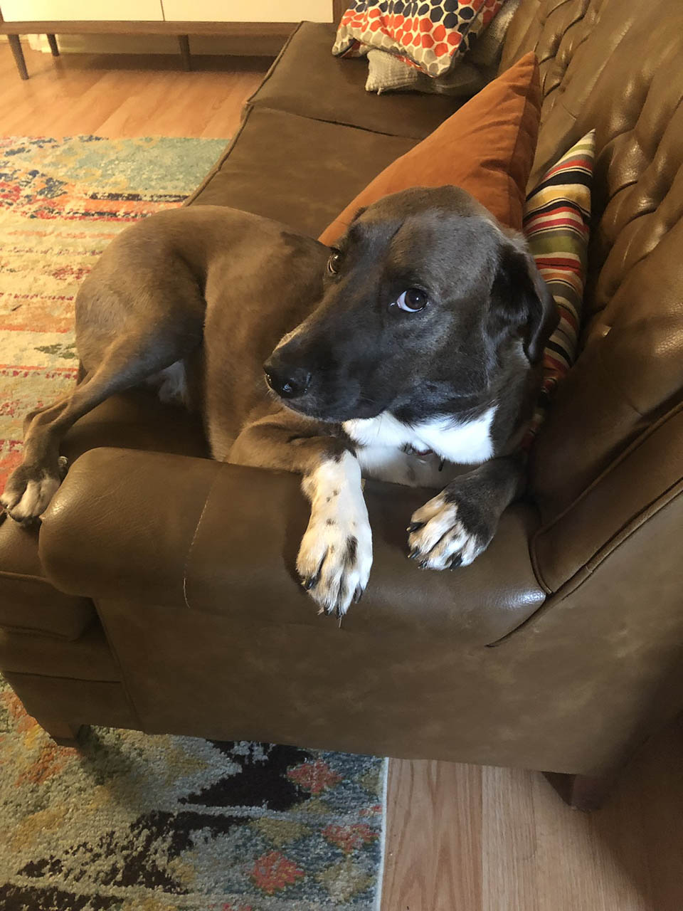 Fritz en el sofá
