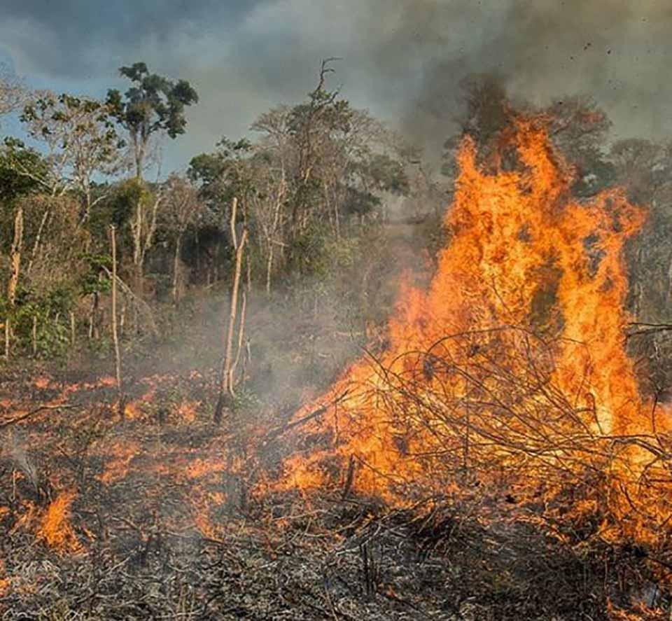 Fuego en selva