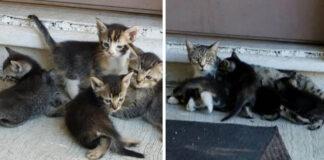 Gata lleva a sus gatitos a la casa de la persona generosa que la ayudó