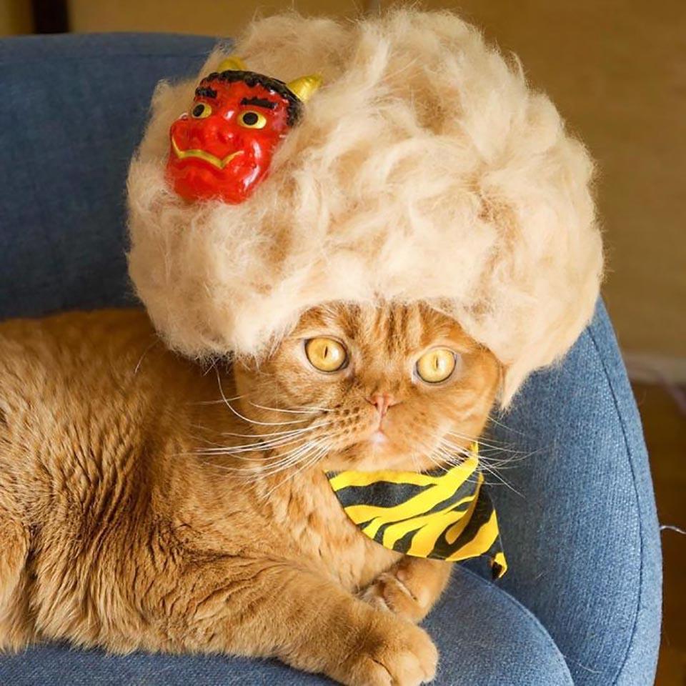 Gatito con peluca