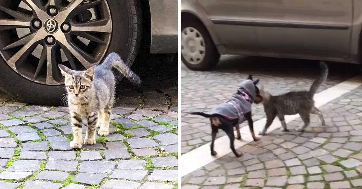 Gatito que vivía en la calle se acerca a cachorro para pedirle ayuda