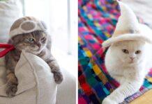 Gatitos tienen una enorme colección de sombreros hechos de su pelaje