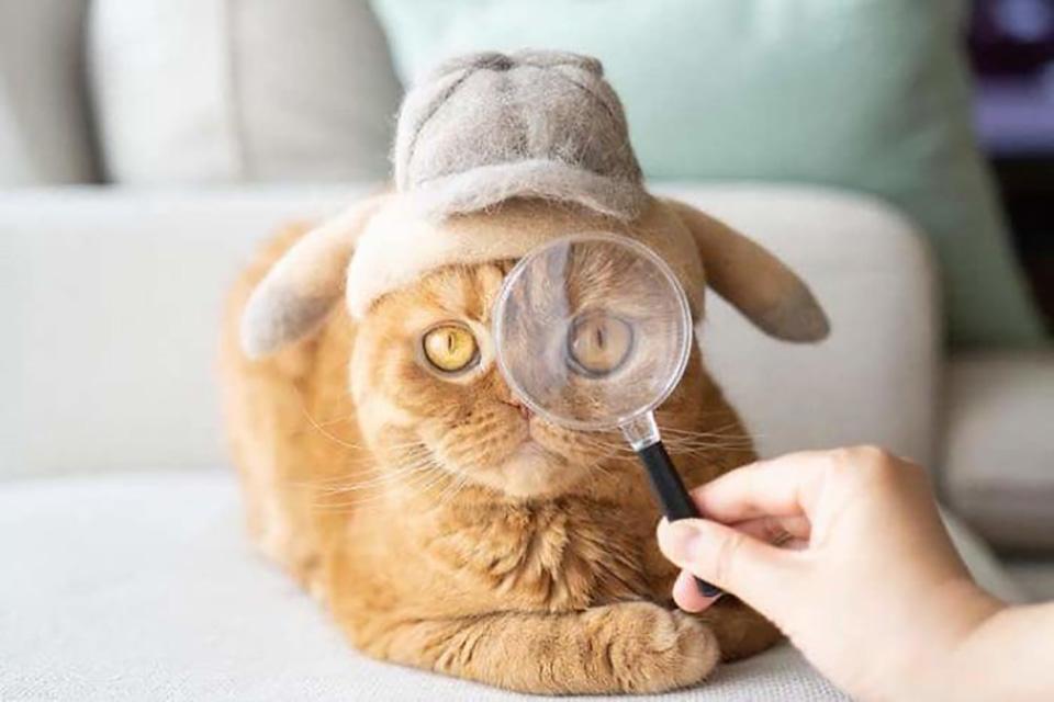 Gato amarillo con sombrero y lupa
