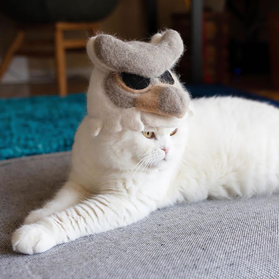 Gato blanco con adorable sombrero