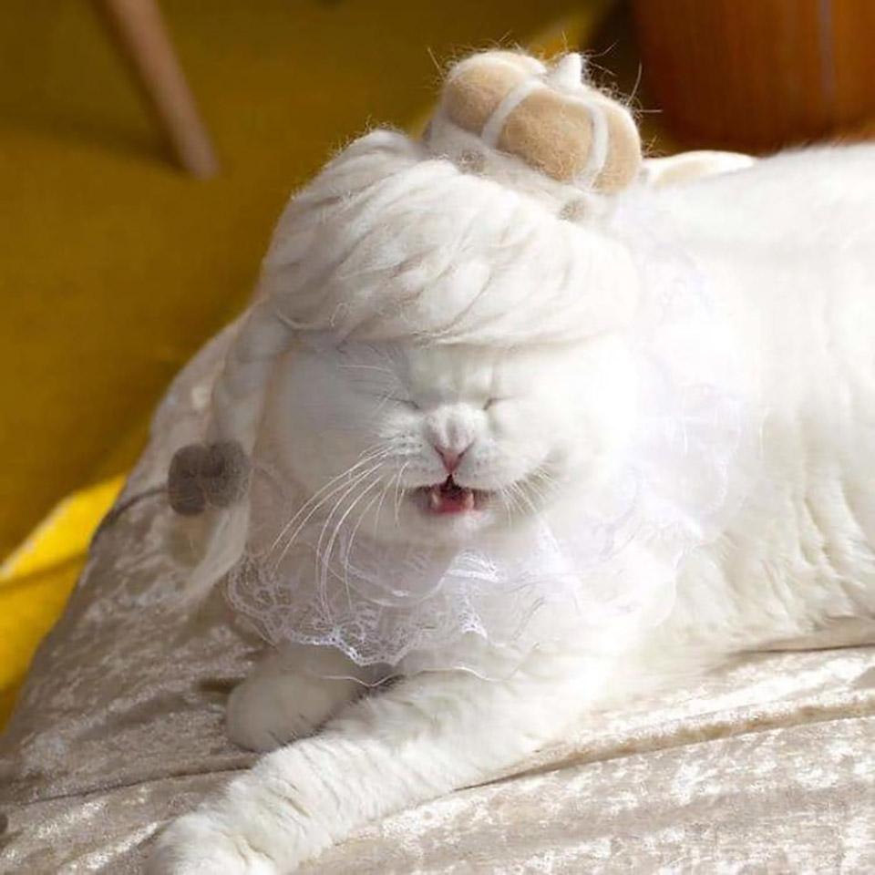 Gato blanco con peluca hecha de su propio pelo