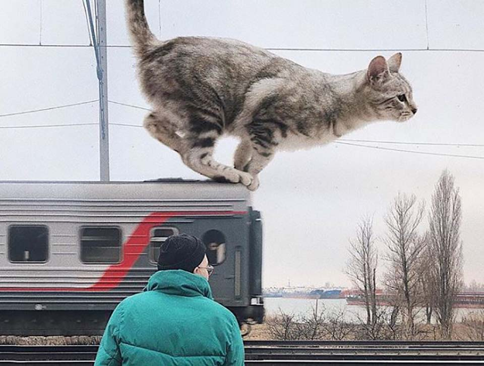 Gato gigante en el tren