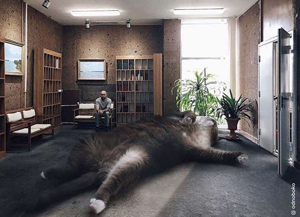 Gato grande descansa en la sala