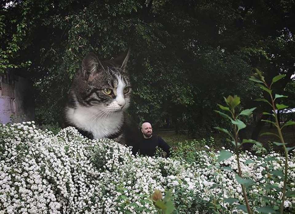 Gato grande y hombre en un jardín