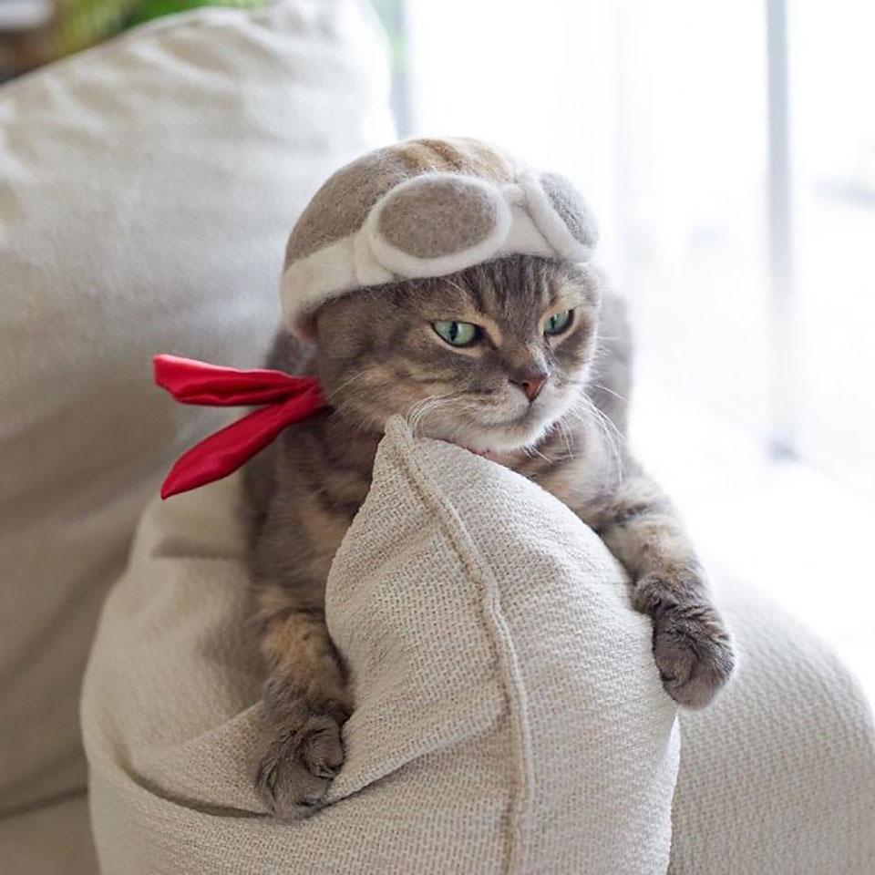 Gato gris con sombrero de pelaje se relaja en el sofá