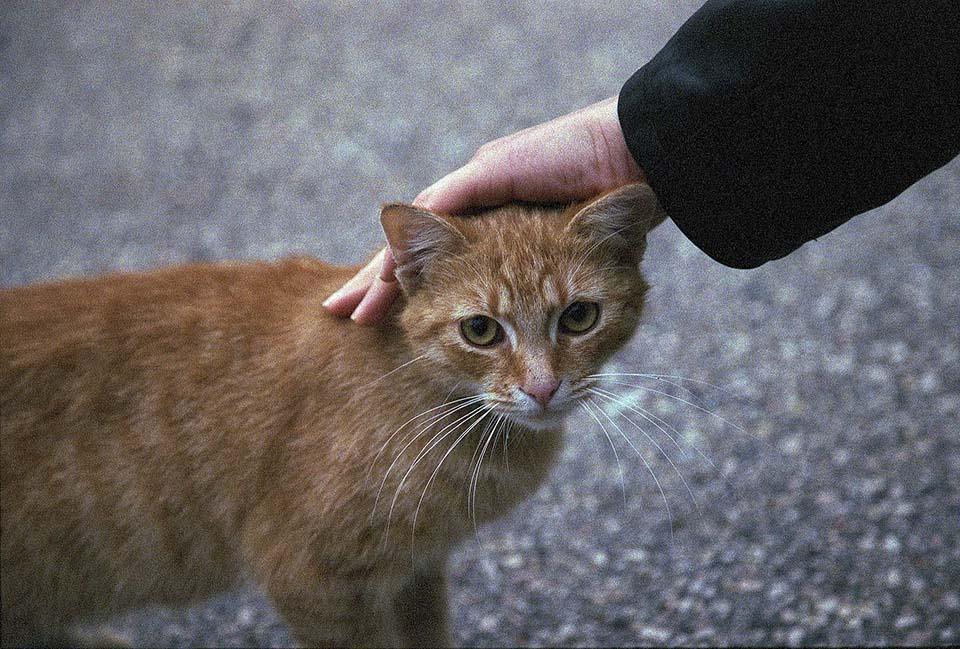 Gato recibe caricias
