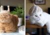 Gatos tienen una enorme colección de sombreros de su pelaje