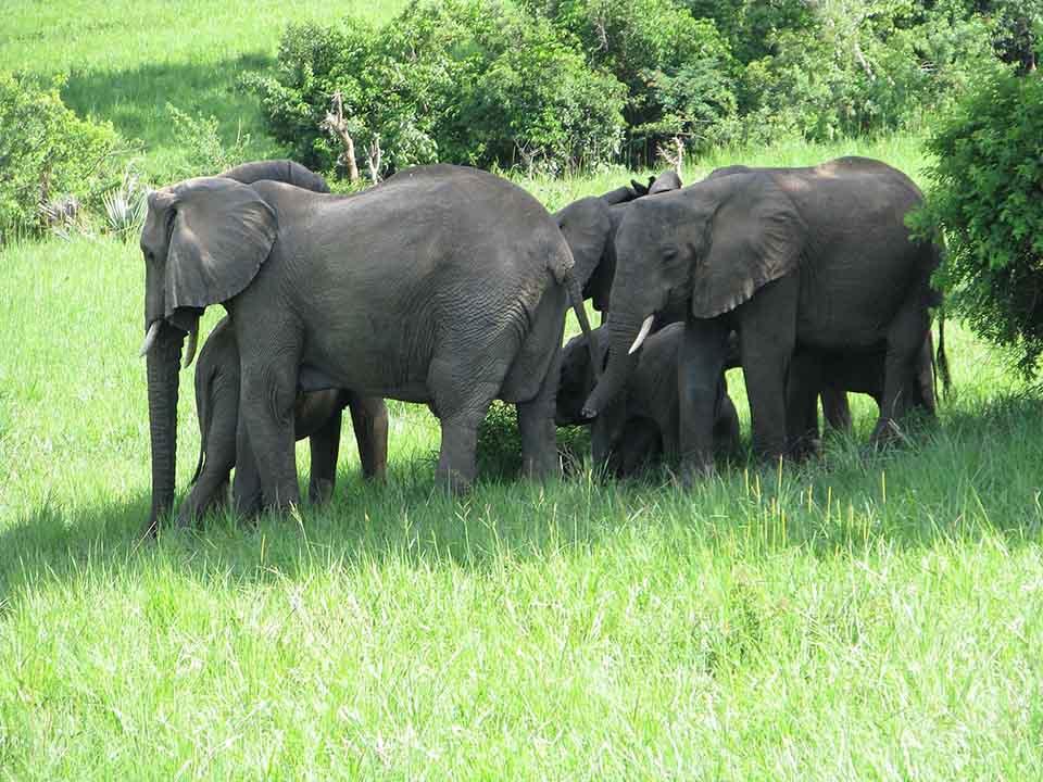 Grupo de elefantes