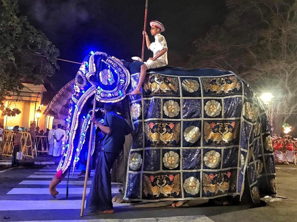 Hombre desfila con elefante