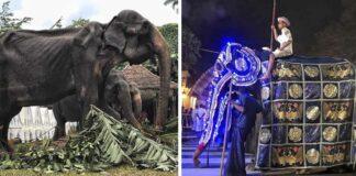 Imágenes exponen el cuerpo demacrado y maltratado de un elefante