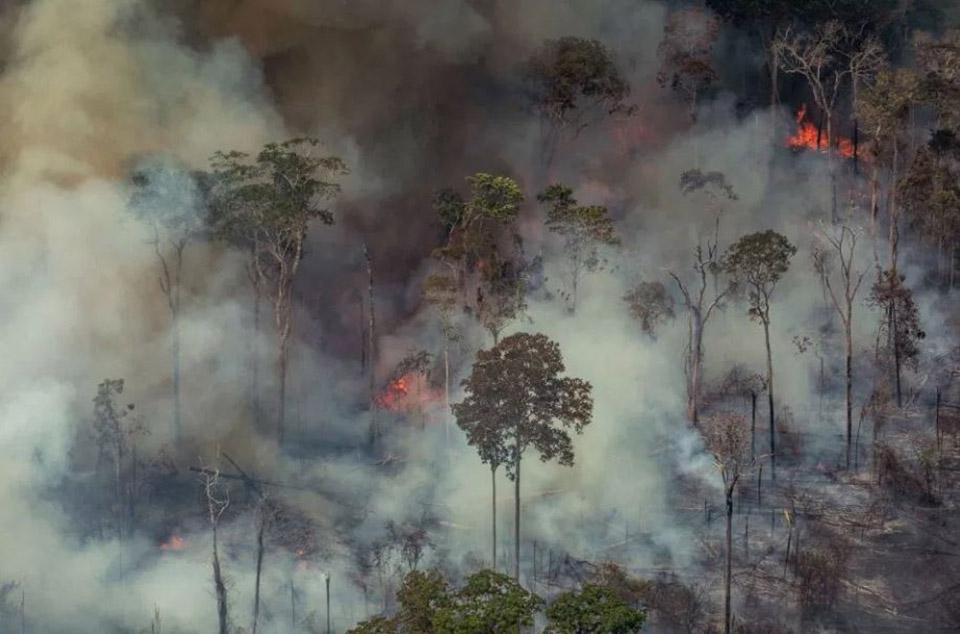 Incendio en la selva