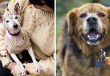 Iniciativa brinda a perros adultos y con enfermedades terminales un hogar