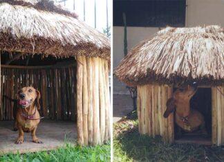 Inasibles casas mayas para perros y gatos