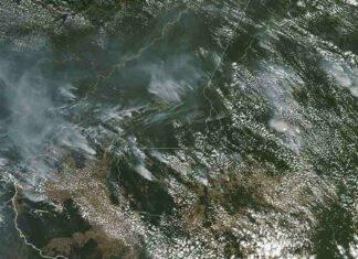 Los incendios en la amazonia se propagan y afectan a miles de animales