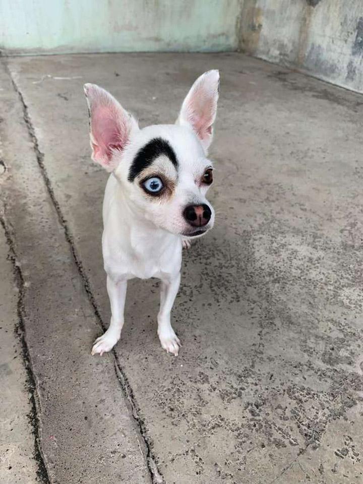 Lucky lindo perro