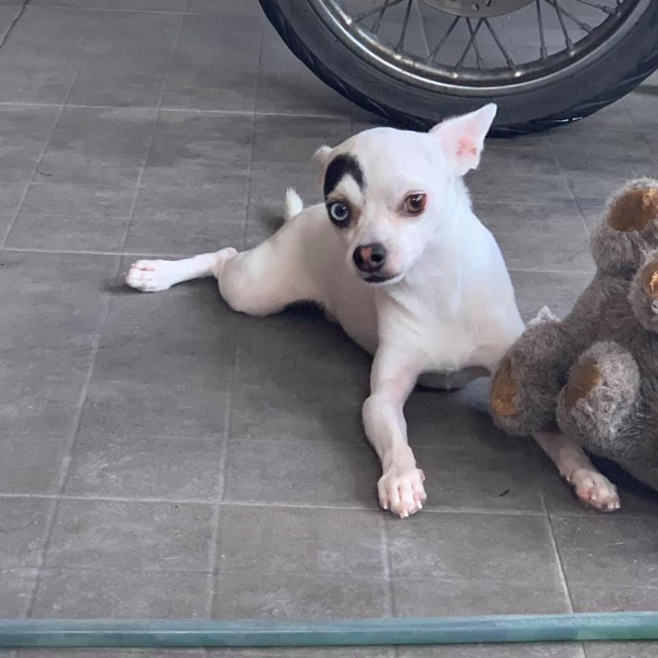 Lucky y su oso