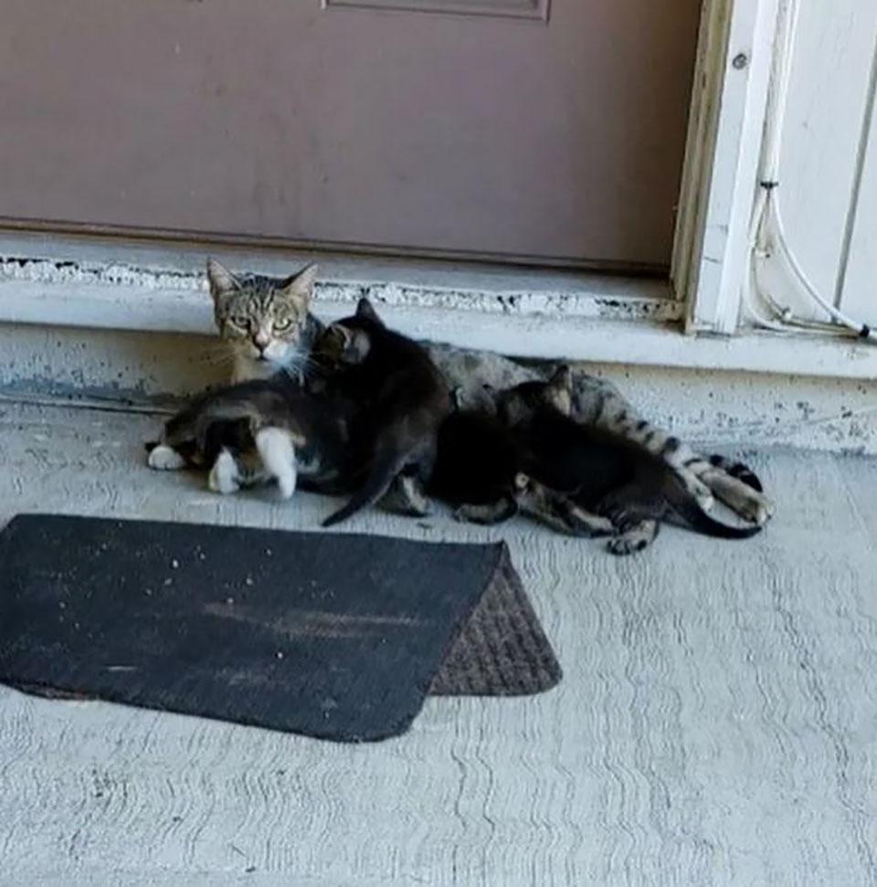 Madre con sus gatitos