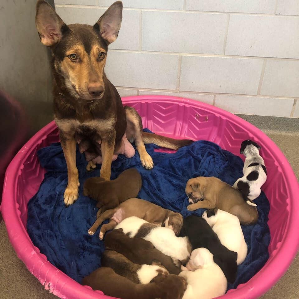 Mamá y sus cachorros