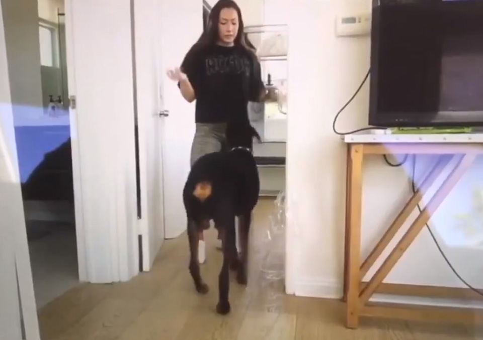 Mujer grita y golpea a perro
