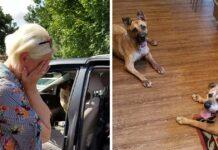 Mujer se lleva a casa a dos perros mas antiguos del refugio