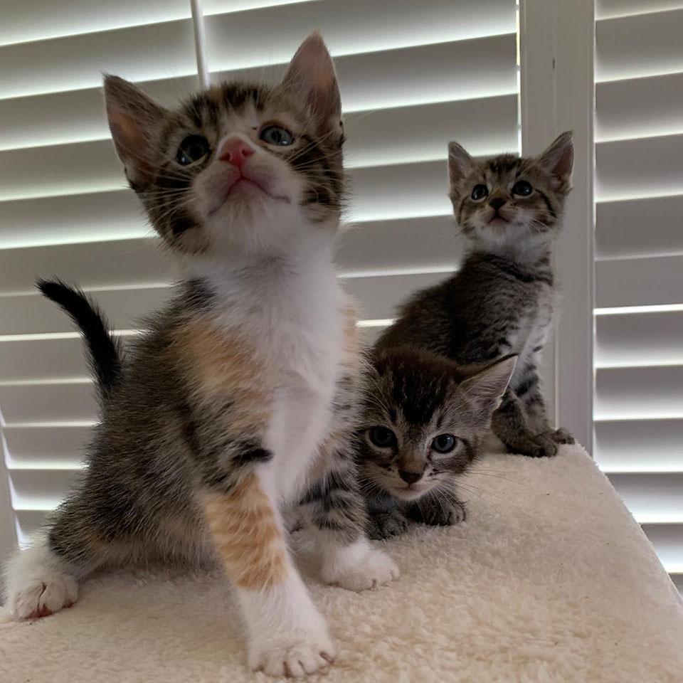 Par de gatitos