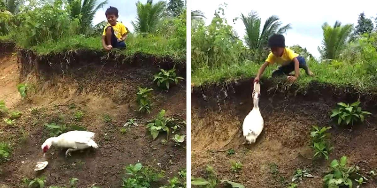 Pato recupera las sandalias de un niño
