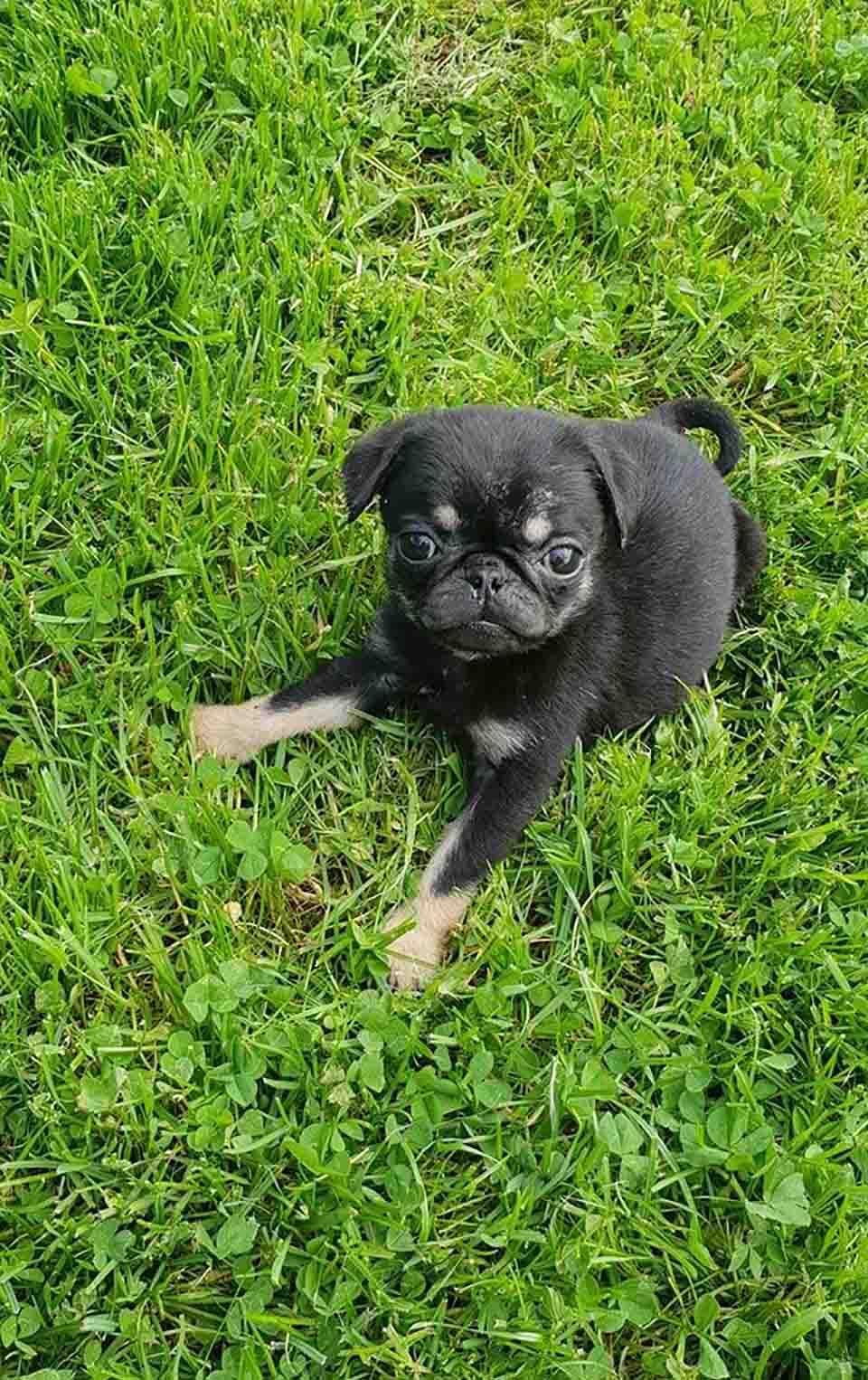 Pequeño cachorro en la hierba