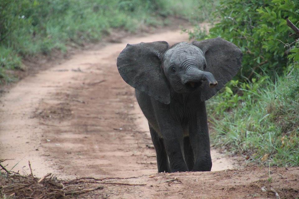 Pequeño elefante