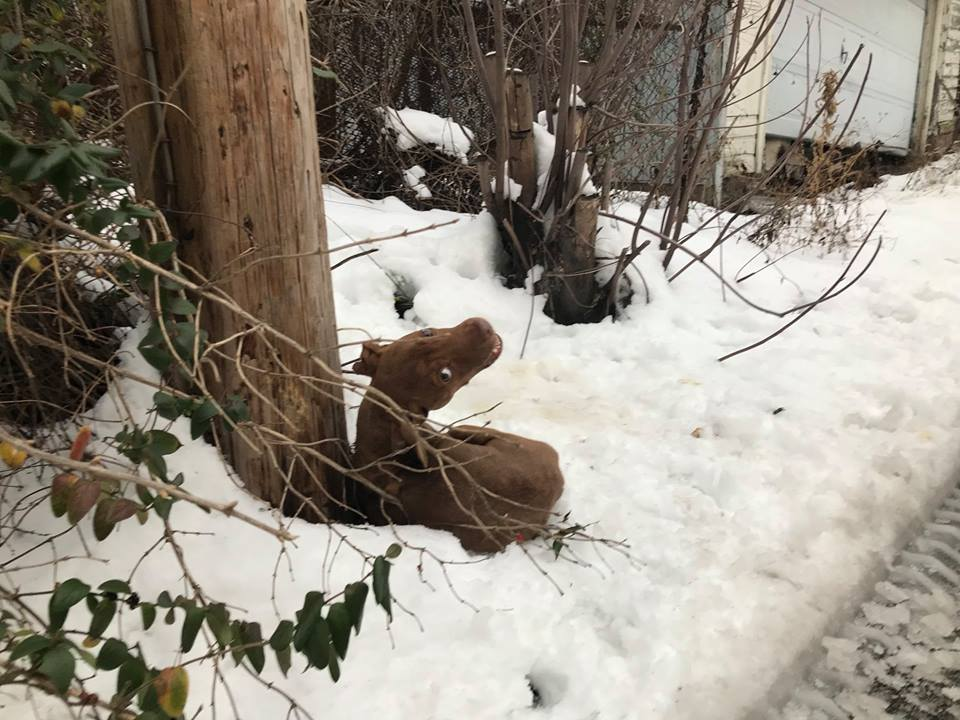 Perrito en la nieve llora