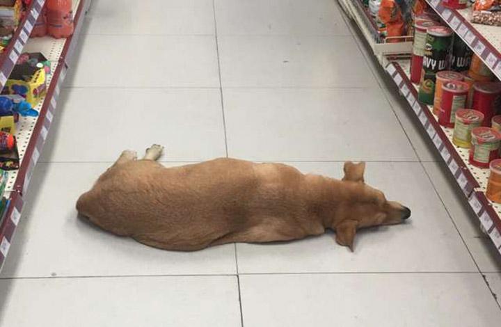 Perrito en una tienda durante ola de calor