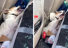 Perrito fue hospitalizado después de estar en un auto a alta temperatura
