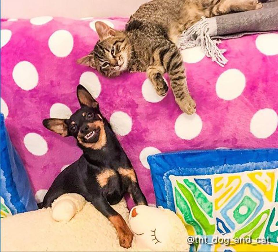 Perrito sonríe con gatito