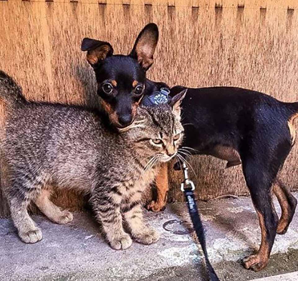 Perrito y gato son como hermanos inseparables