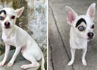 Perro de apariencia única enamora a todos