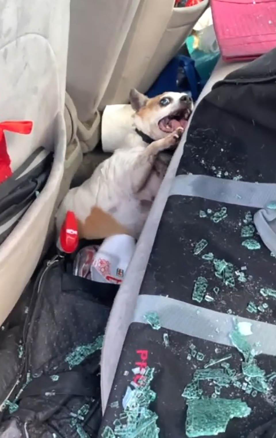 Perro estaba sufriendo en el auto