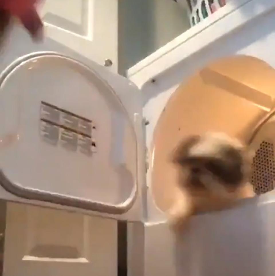 Perro intenta salir de la secadora de ropa