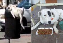 Perro le cortaron la cola mientras buscaba comida en basurero