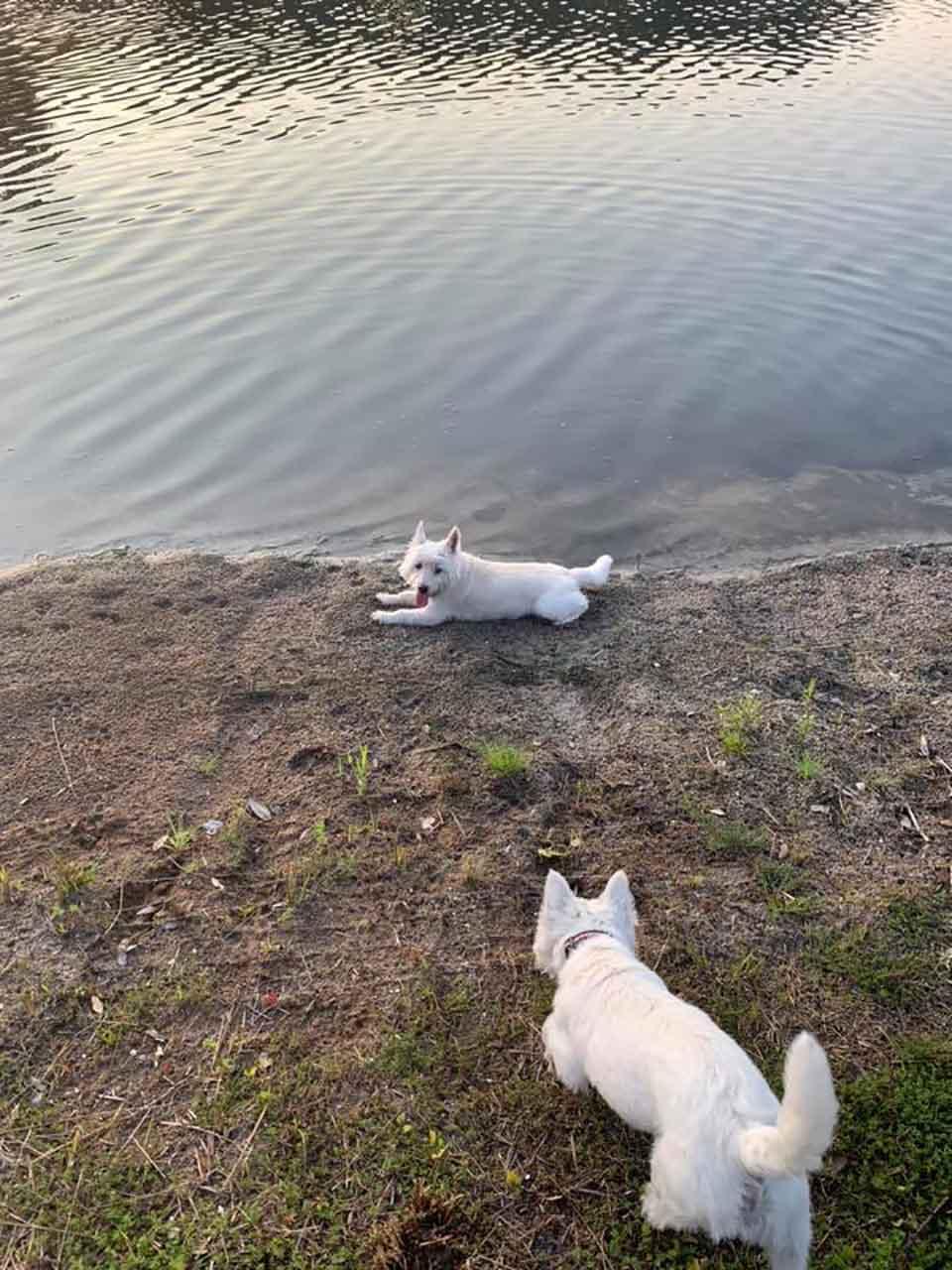 Perros cerca del agua