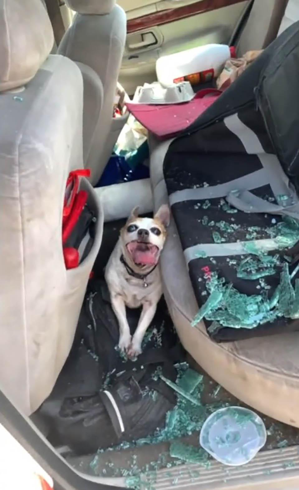 Policía rompe las ventanas de un auto para salvar a perrito