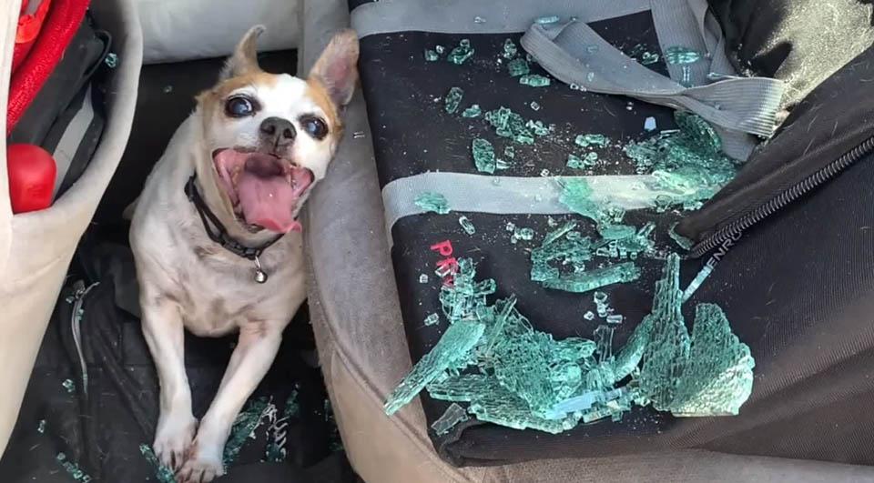 Policía salva a perrito en auto caliente
