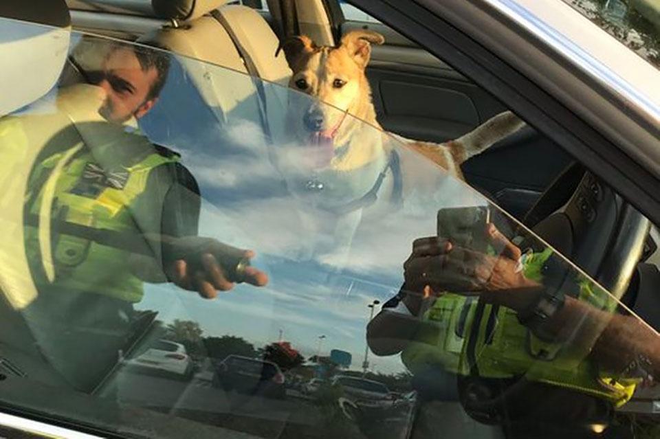 Policías buscan la forma de rescatar a perrito atrapado en auto