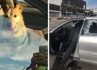 Policías rompieron las ventanas de un auto para salvar a un perro